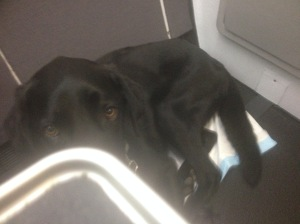 Wiley travelling in business class on a QANTAS jet